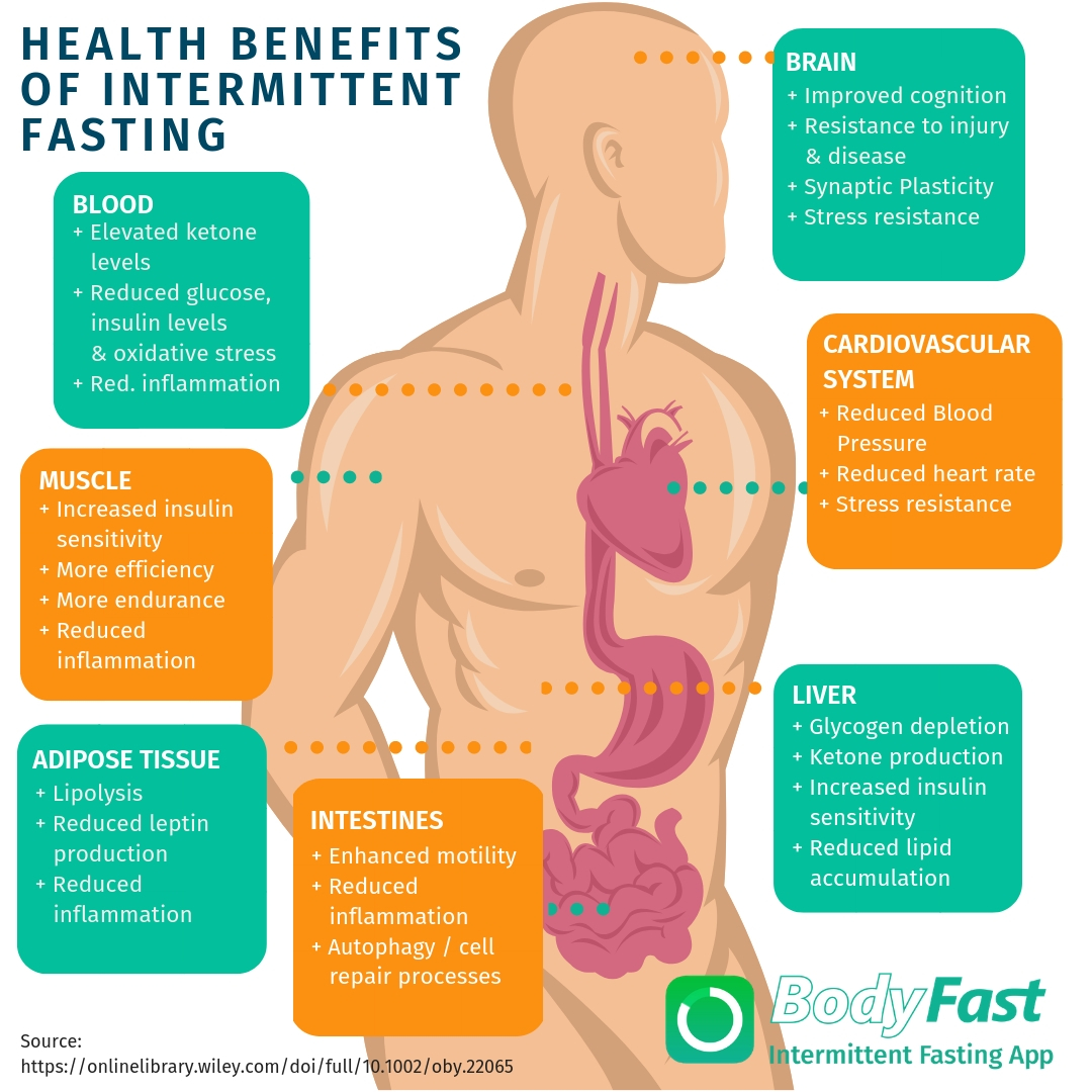 Health benefits of intermittent fasting - BodyFast info graphic