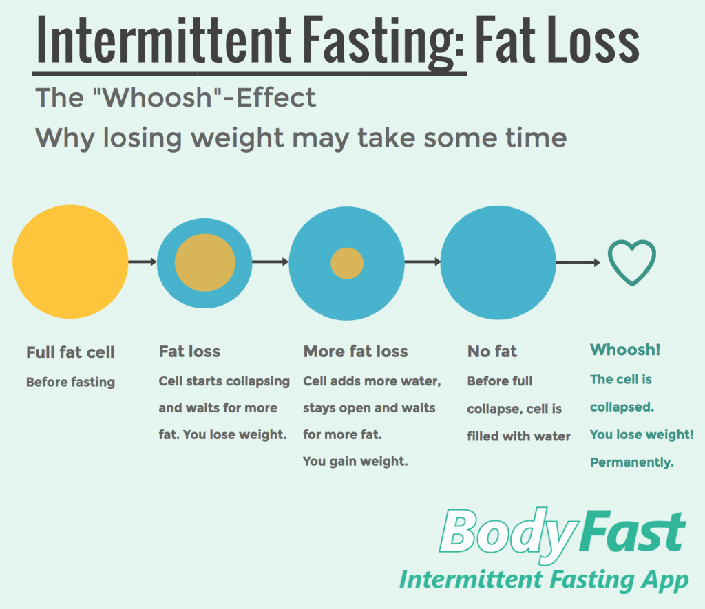 Intermittent fasting and fat loss - BodyFast info graphic